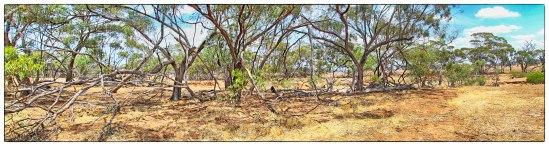 Moore River East Cutting, Yarawindah, Western Australia